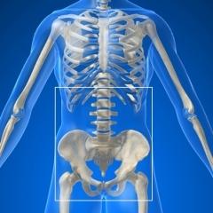 Lower back and pelvis